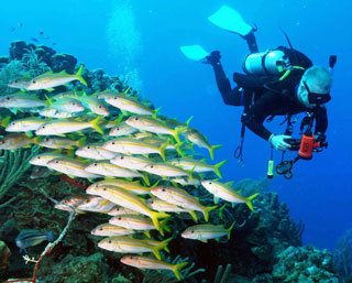 belize barrier reef scuba diving
