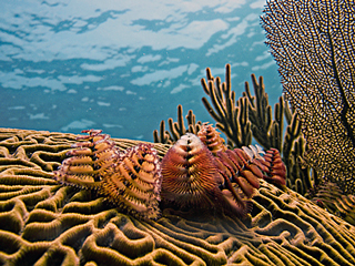 coral naturalist course padi placencia
