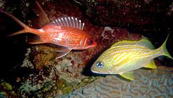 fish-identification-dives-belize