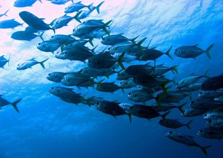 snorkel tours placencia belize