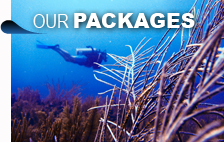 Diving and snorkeling packages