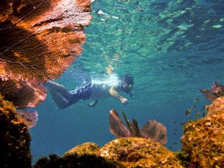 skin-diving-placencia-padi-belize-course.jpg
