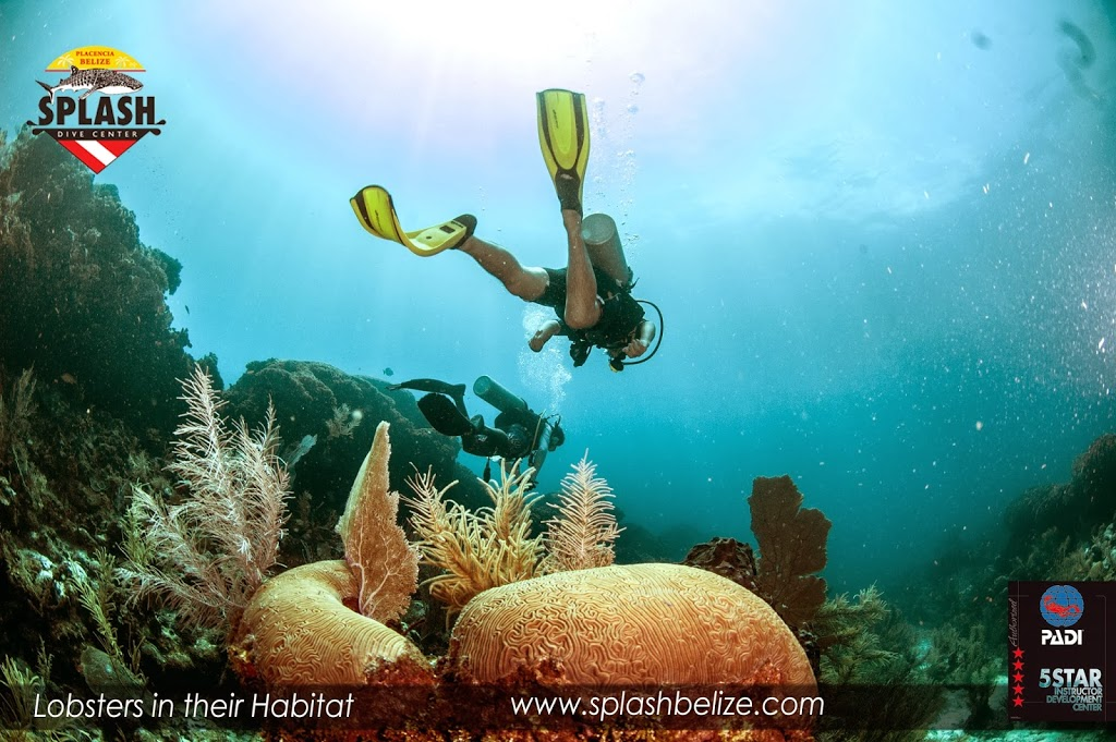 placencia belize tours