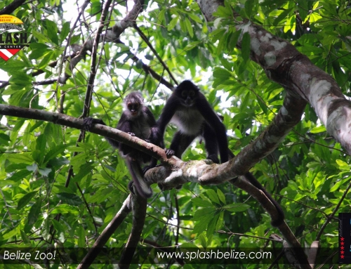 Explore Belize's Wild Side in a Friendly Setting
