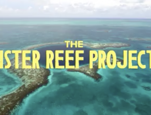 SPLASH PARTNERS WITH THE BELIZE SISTER REEF PROJECT