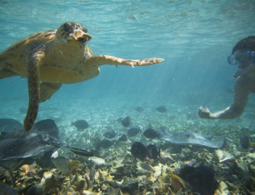 Belize | Doing Its Part to Reduce Pollution