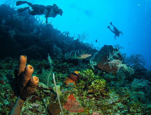 Belize | The Best Diving Destination In Central America