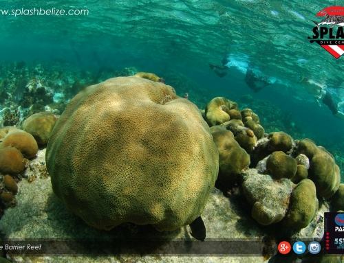 Belize Barrier Reef Beats Endanger List