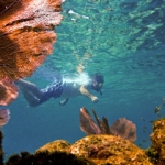 skin-diving-placencia-padi-belize-course-2