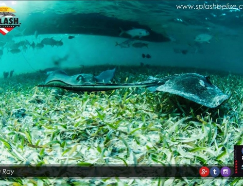 Why is Belize The Best Scuba Diving Spot?