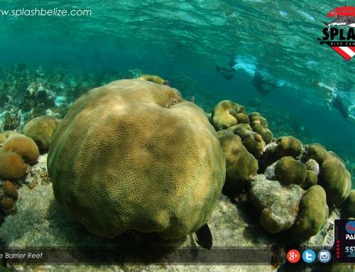 Belize Barrier Reef Beats Endanger List